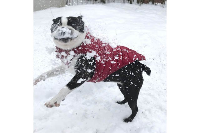 Dogs Who Absolutely Love Winter