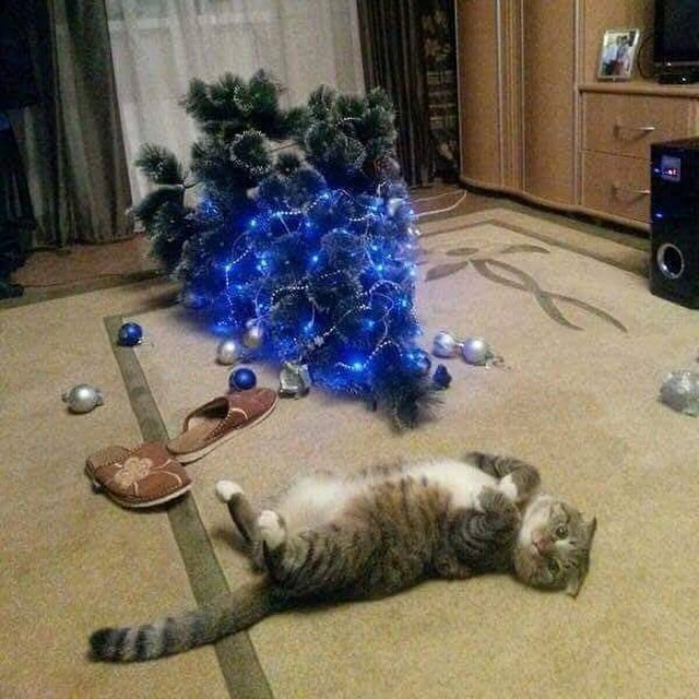 Are Christmas Trees Bad For Cats: 18 More Cats Vs Christmas Trees For Your Holiday Horror