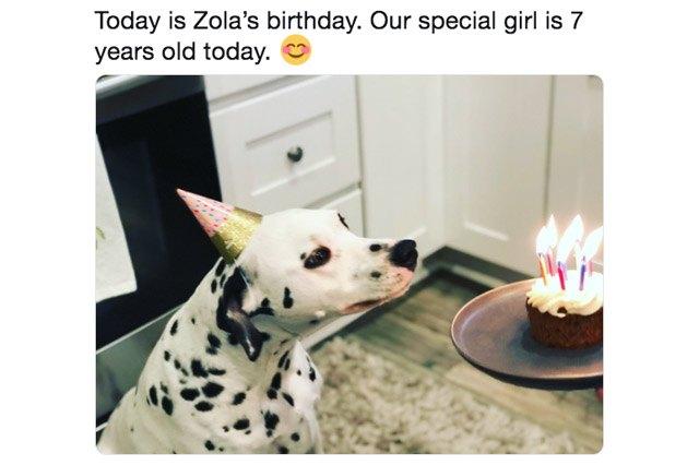 Funny and cute pet pics
