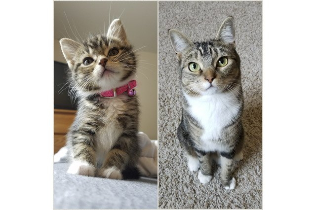Side by side photos of cat as a kitten and an adult.