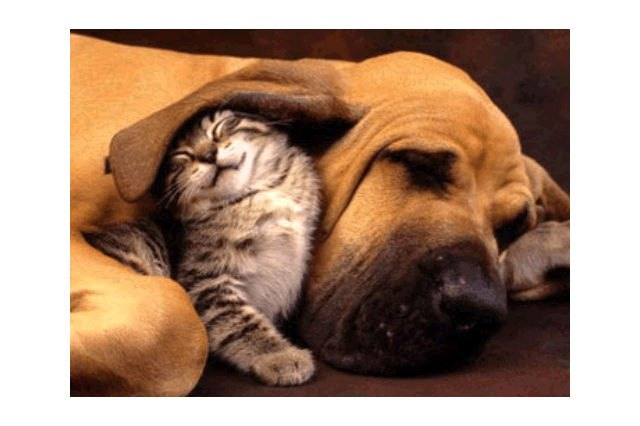These 22 Cat & Dog BFFs Will Make Your Heart Explode From Cuteness