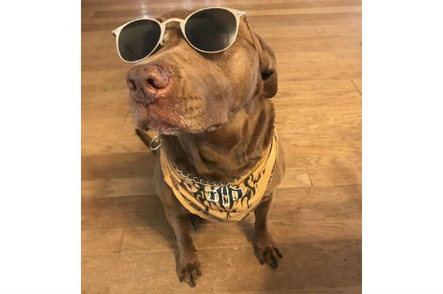 18 Pets Looking Fabulous In Sunglasses
