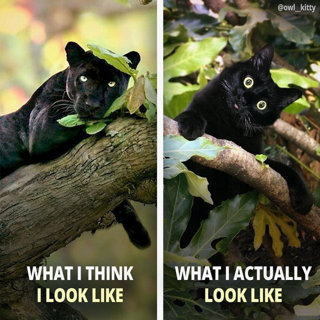 20 Photos That Prove Black Cats Are High-Key Magic