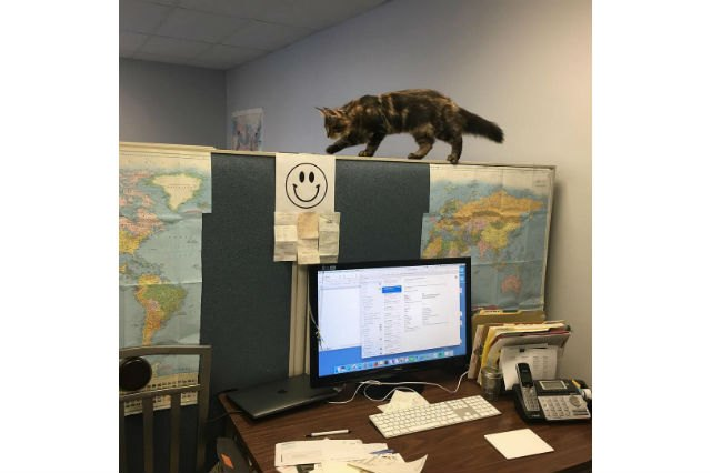 21 office cats hard at work officing
