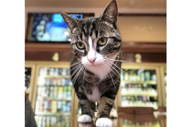 Only 24 of the cutest bodega cats