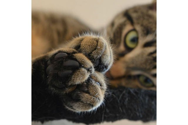 Only Look at These 15 Kitties' Paws if You're Ready to Fall in Love