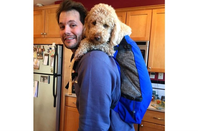 Dogs in backpacks