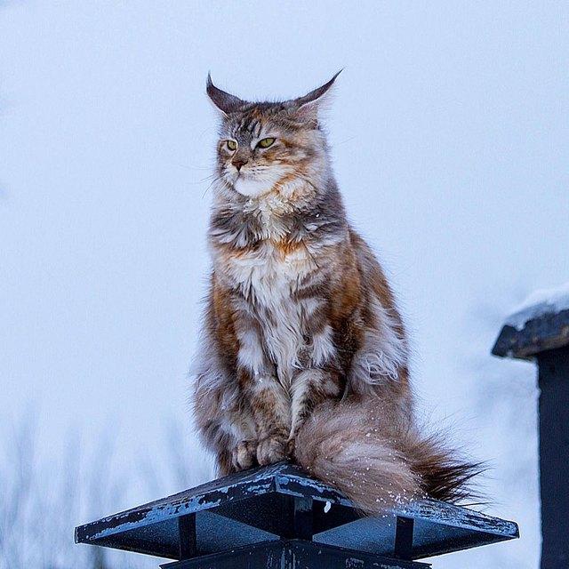 221 Majestic Cat Names