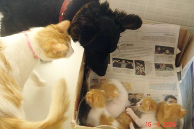 This dog is helping a cat raise kittens!