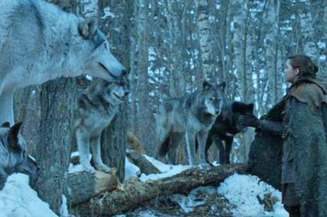 A Game of Thrones character is greeted by wolves.