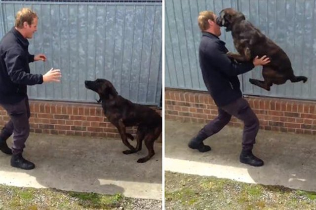This dog jumps into its owners arms.