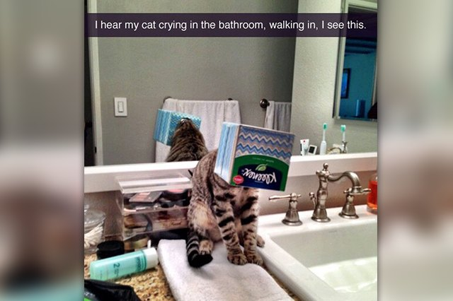 23 Thoughts You'll Inevitably Have While Cat Sitting