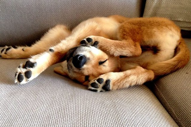 15 Sleepiest Puppies To Ever Take A Nap