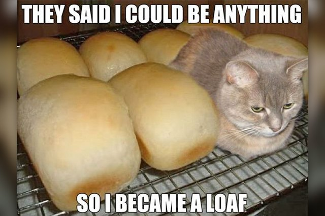 cat sitting next to loaves of bread