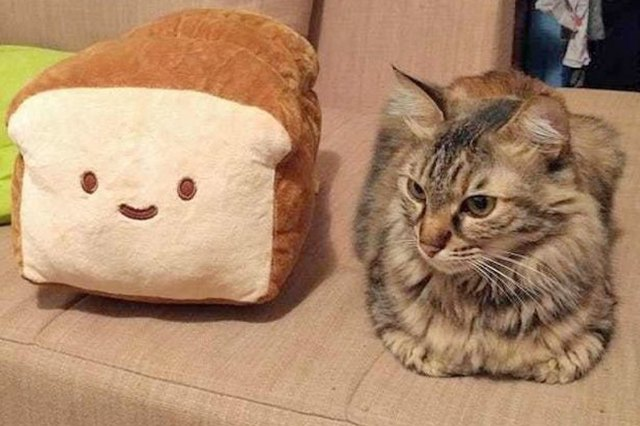 cat loaf sitting next to a toy loaf