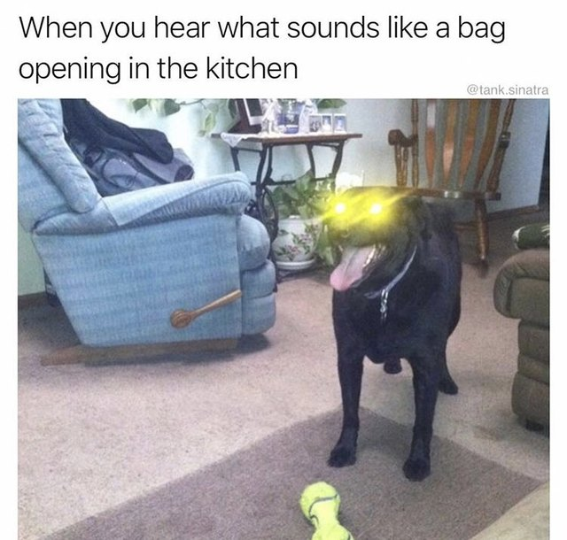 Dog with lens flare in eyes excited about treats