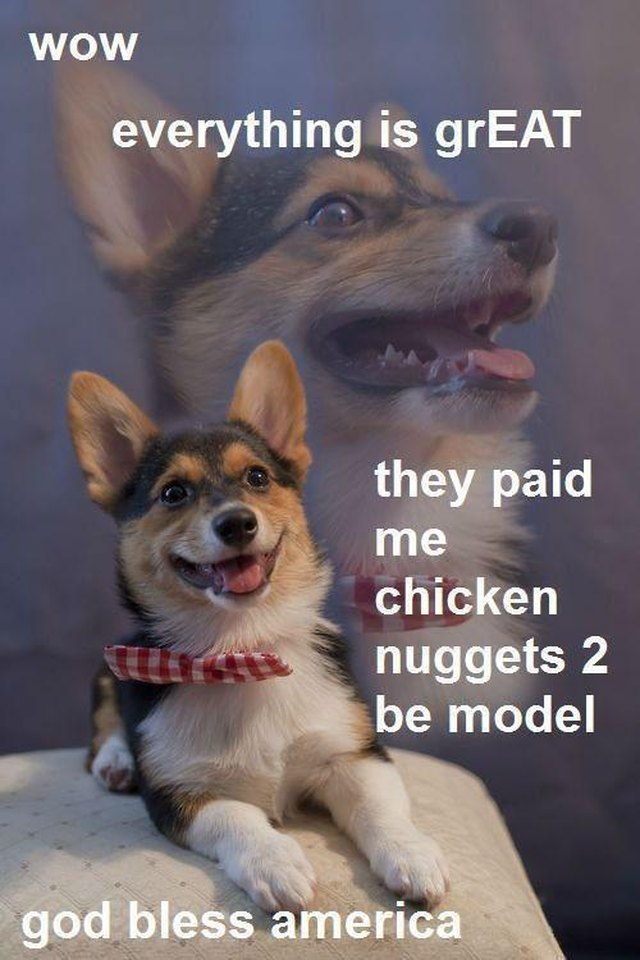 Dog happy to be paid in chicken nuggets for modeling