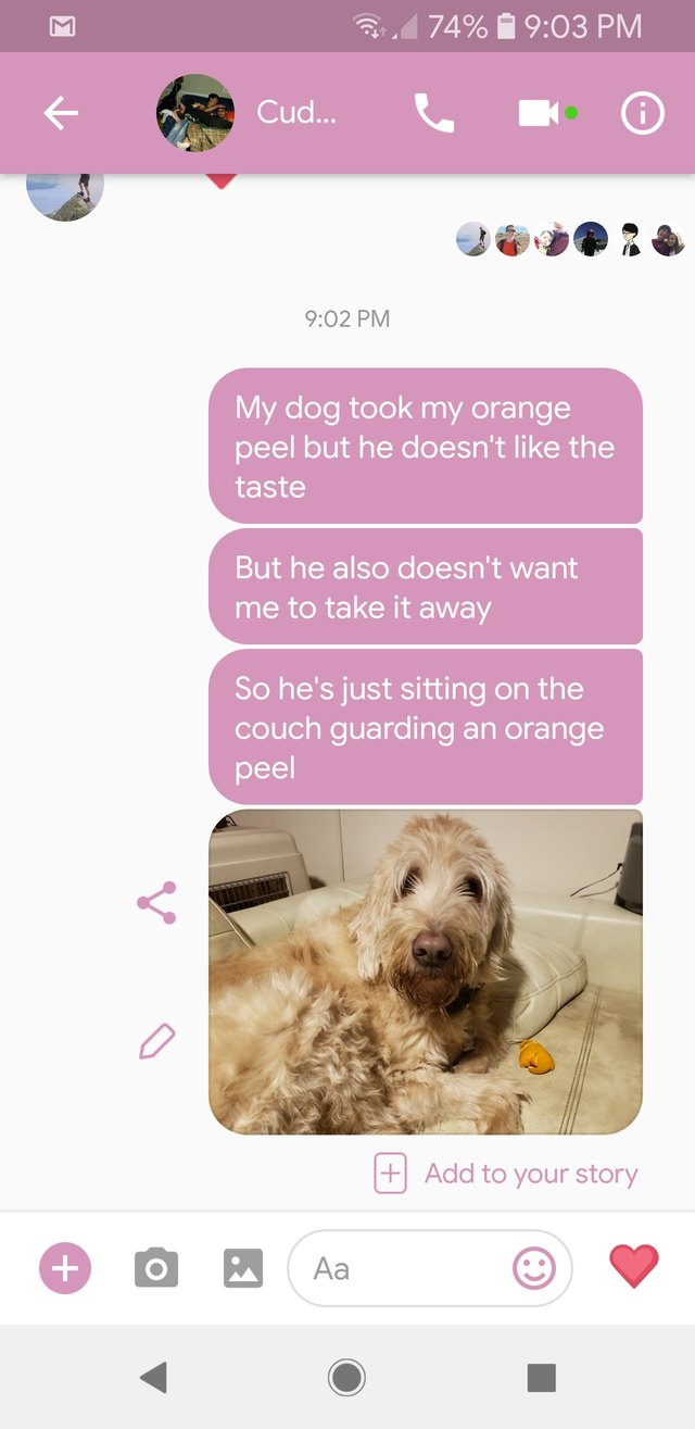 Text message exchange about dog guarding an orange peel