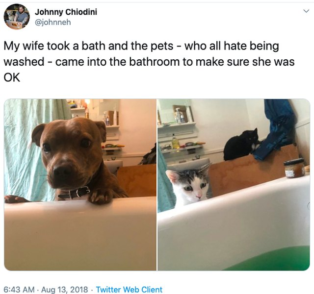 Dog and cat concerned about human taking a bath