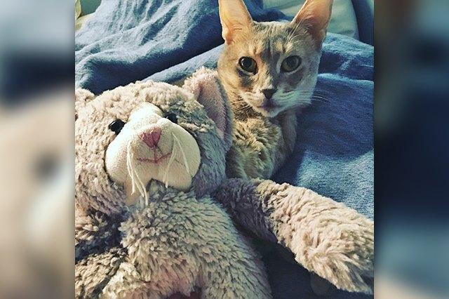 cute cuddle cat