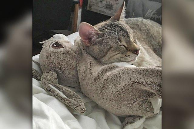 kitty snuggle soft