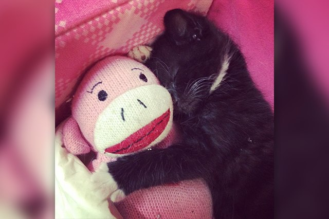 black kitty snuggles monkey