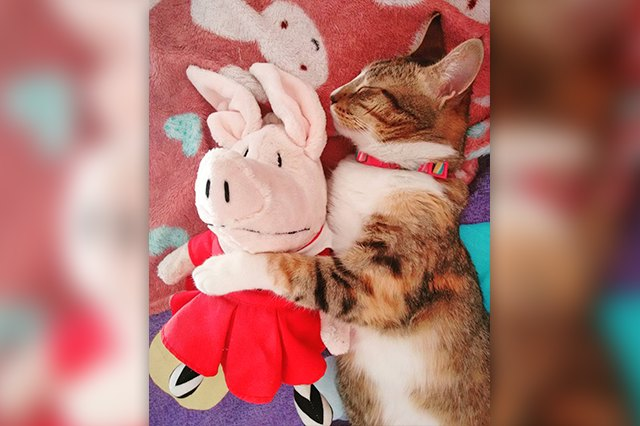 kitten cuddling toy
