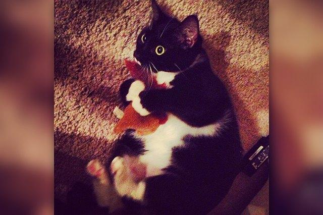 kitten hugging toy