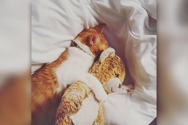 kitten hugs toy