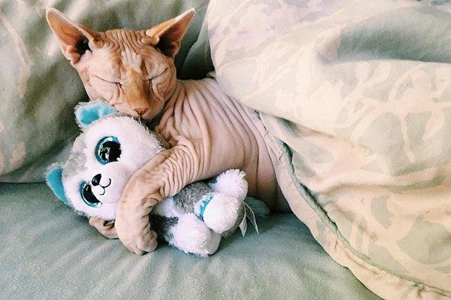 cat hugs love