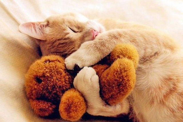 snuggle cat