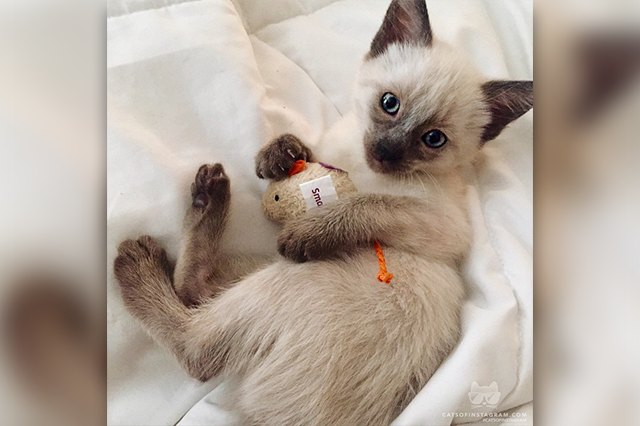 cat hugs toy
