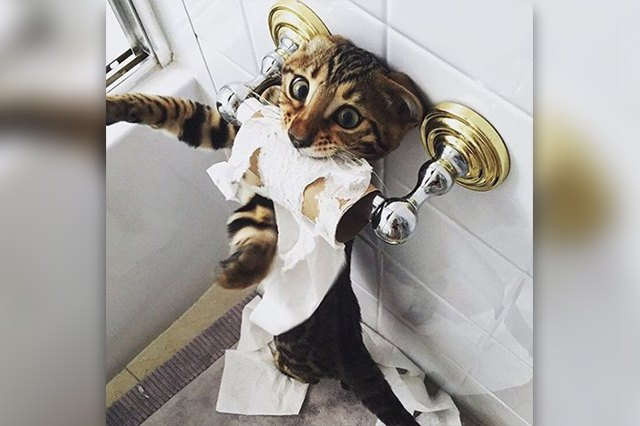 16 Cats Who Are At War With Your Toilet Paper