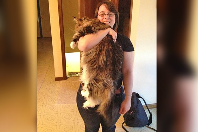 Ridiculously Big House Cats