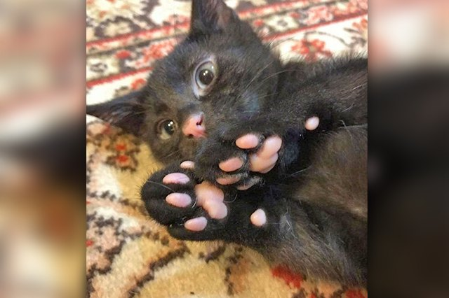 Perfectly Pink Photos Of Kitty Toe Beans