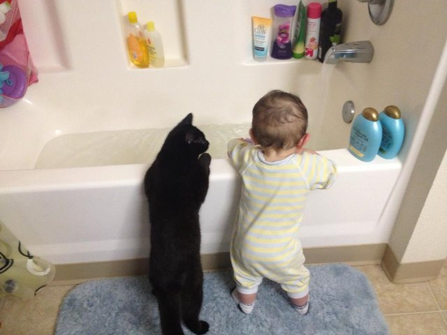 Cat and baby looking into bathtub.