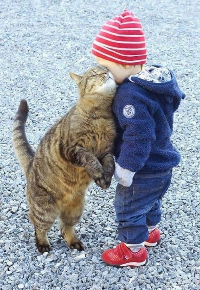 Cat rubbing its face against toddler.