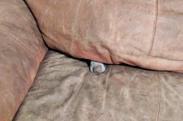 dog in the couch