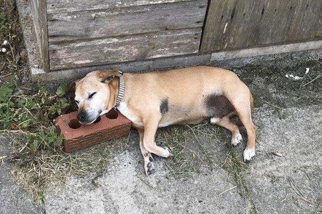 dog sleeps on brick