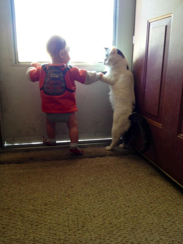 Cat and toddler standing up.