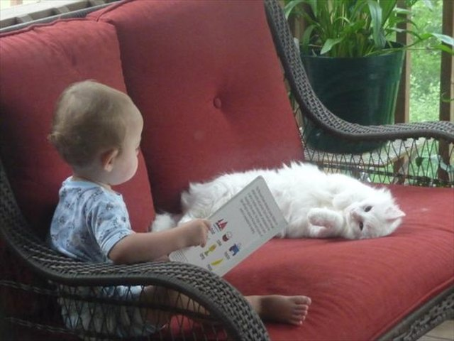 Baby with a book sitting on a couch with a cat.