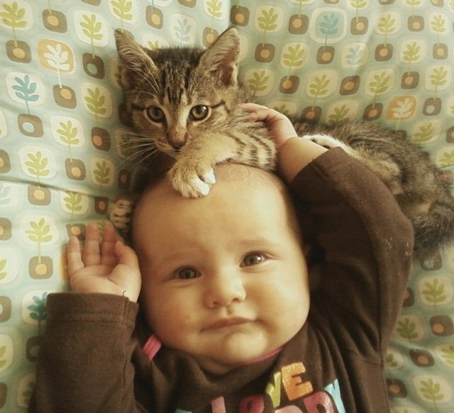 Kitten sitting on baby's head.