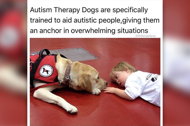 23 Therapy Dogs Who Are Too Pure For This World