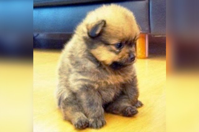 25 Chubby Puppies You Need To Snuggle Right Now Cuteness