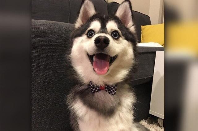 20 Puppies With The Best Smiles On The Internet