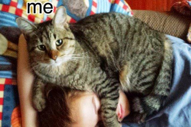 cat on human's head