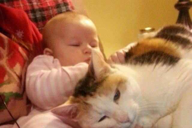baby and cat on parent's lap