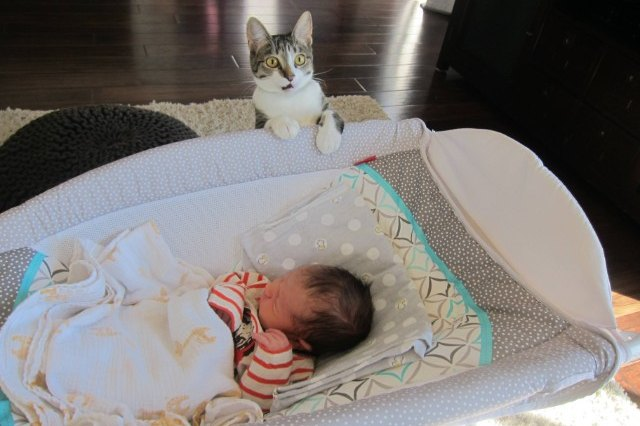 cat surprised to see baby in crib