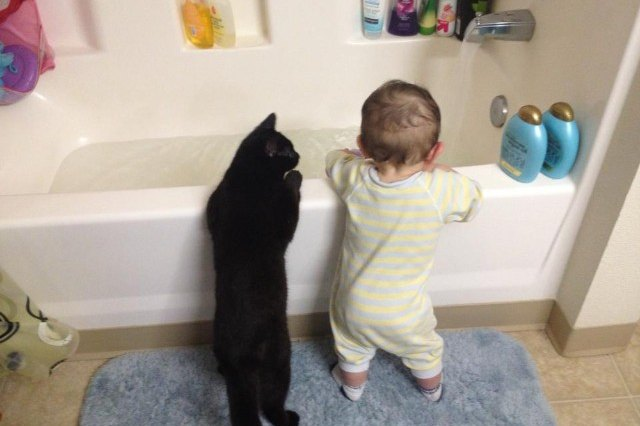 cat and baby looking into bathtub