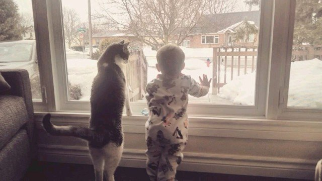 cat and baby looking out window at snow
